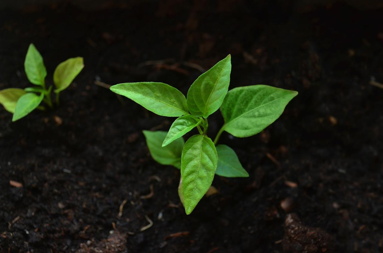 Comment bien choisir le terreau pour son jardin ?