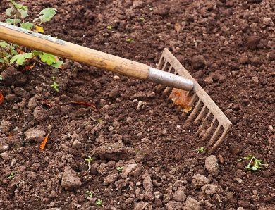 Le rateau, un indispensable pour le bon jardinier