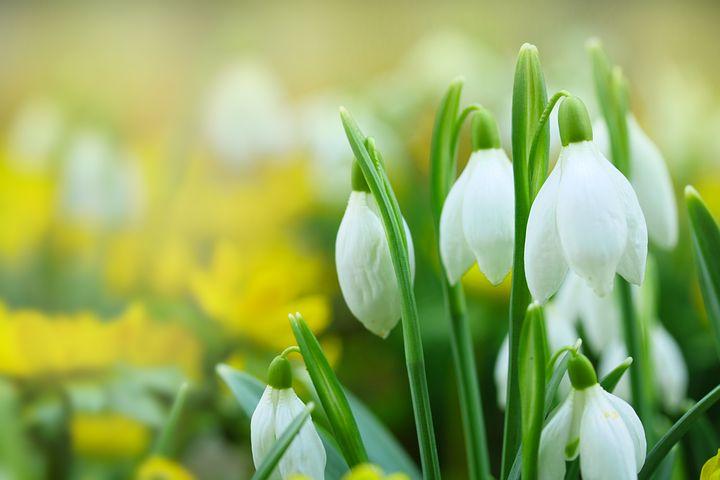 Les plus belles fleurs du printemps pour jardin