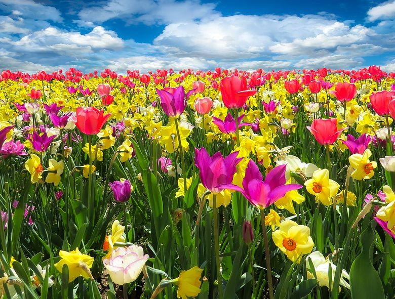 Quelles fleurs éclosent toute l'année ?