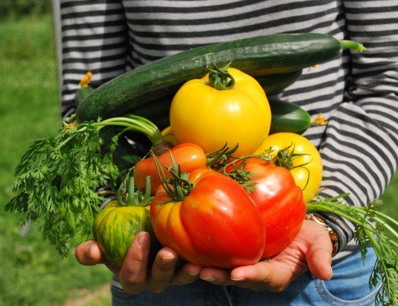 Quelques idées de fruits et légumes pour un jardin potager